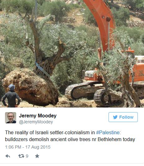 Jeremy Moodey Olive Tree.jpg
