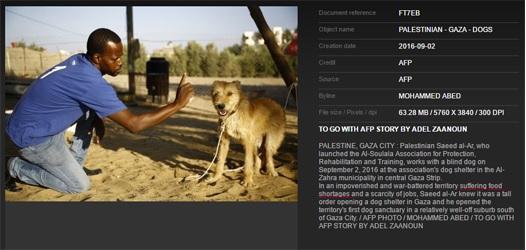 afp dogs food shortages 2.jpg