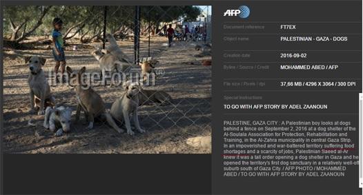 afp food shortage.jpg