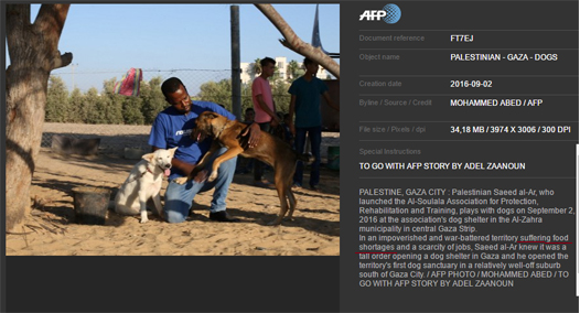 afp gaza food shortage dogs.png
