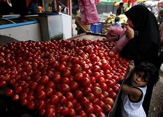 gaza food crisis tomatoes.jpg