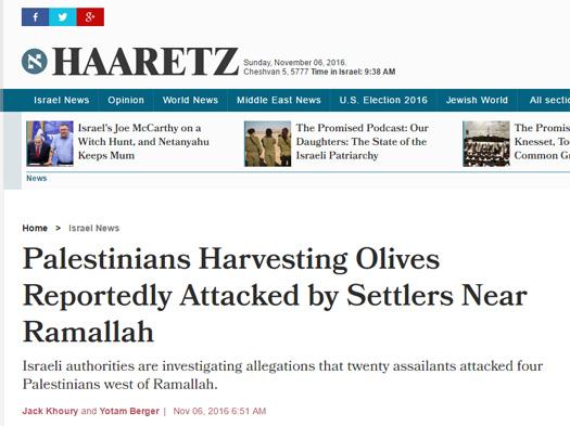 olive harvest online reportedly.jpg